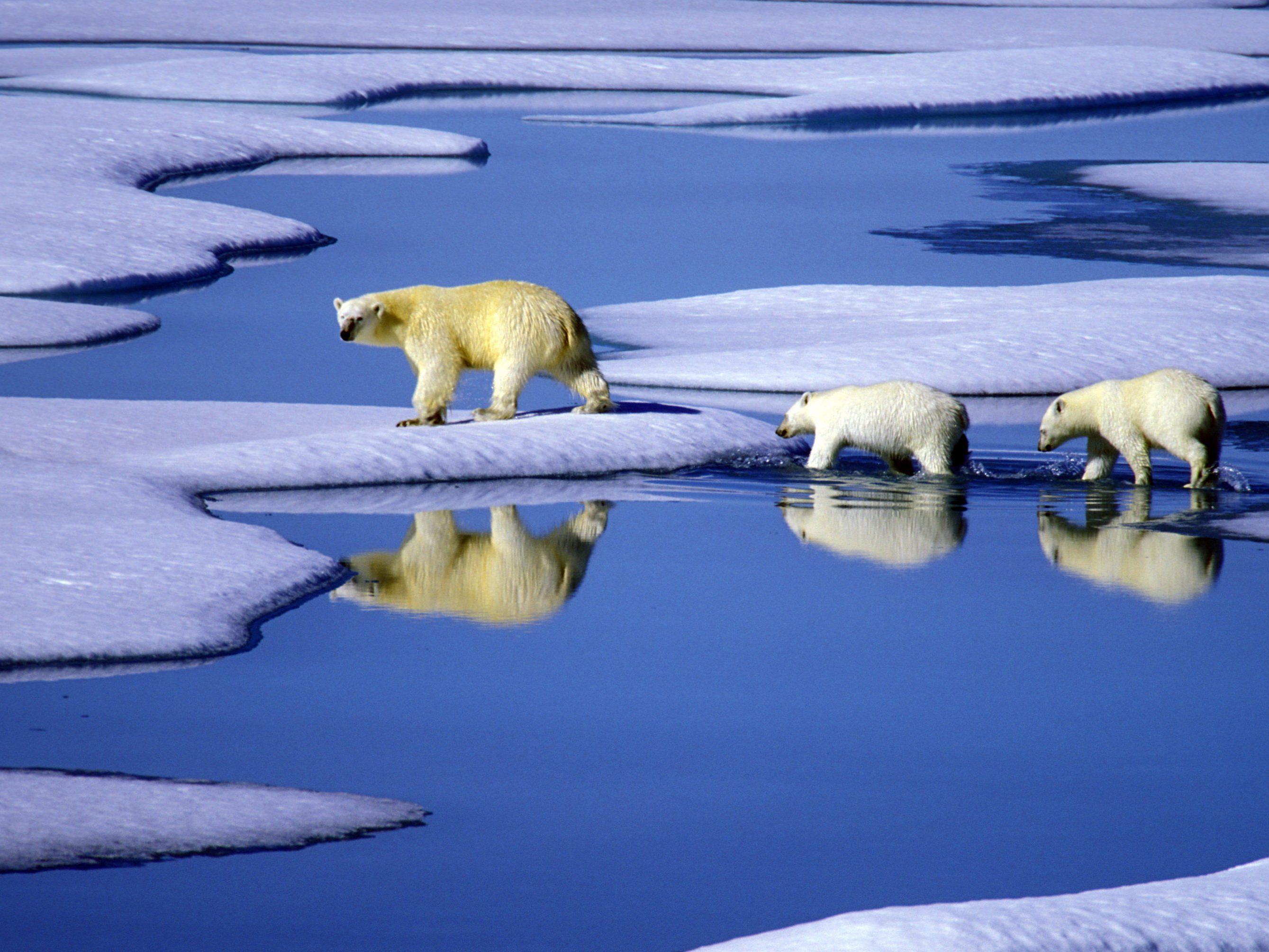 Schmelzendes Eis in Kanada: Tierarten mit großem Wanderradius wie Eisbären sind vom Klimawandel besonders bedroht.