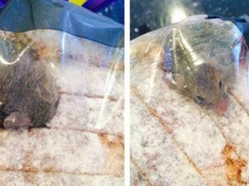 Eine Maus in der Brot-Tüte verdarb einem britischen Aldi-Kunden den Appetit.