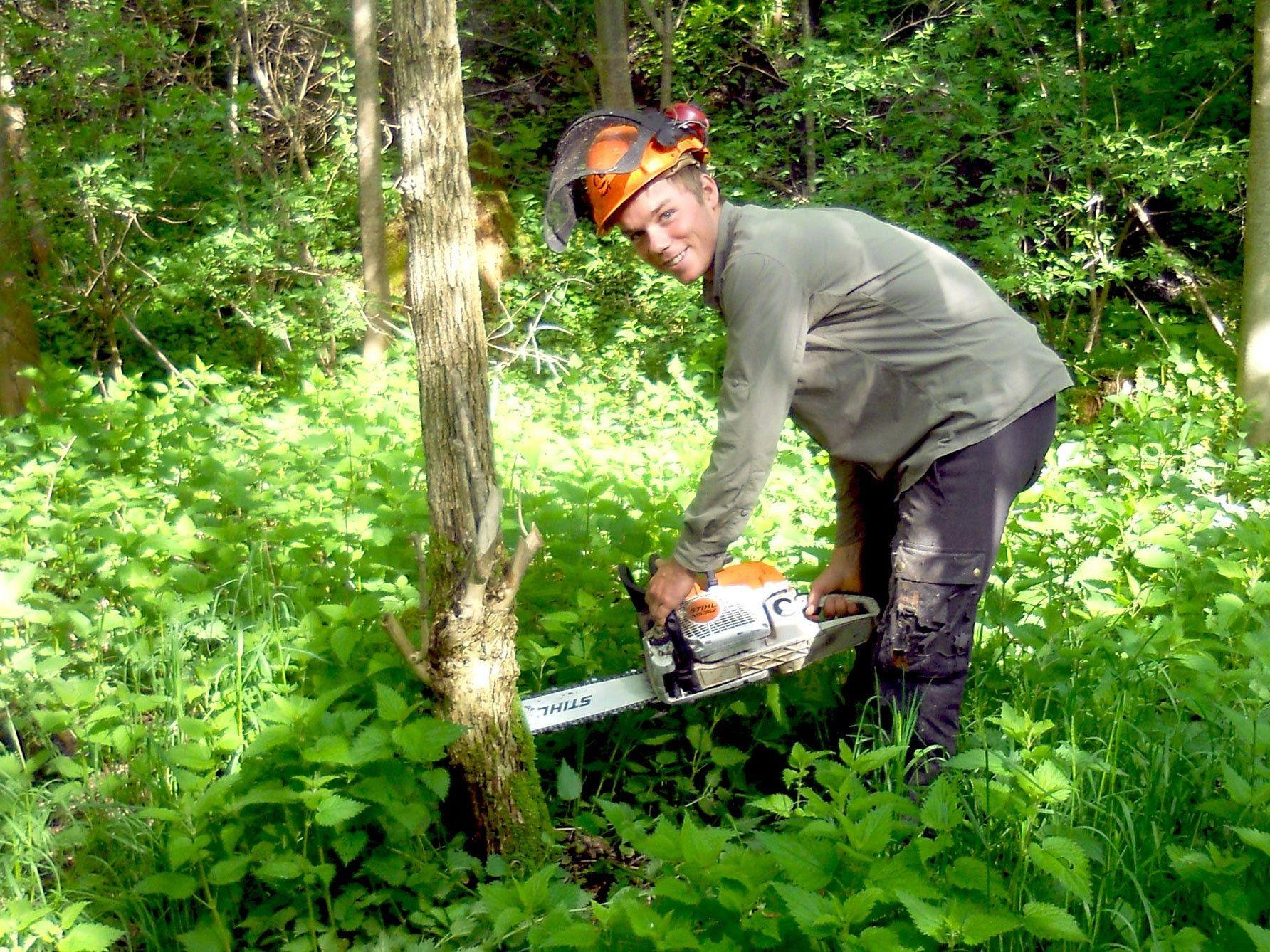 Die intensive Waldpflege der vergangenen Jahre macht sich bezahlt.