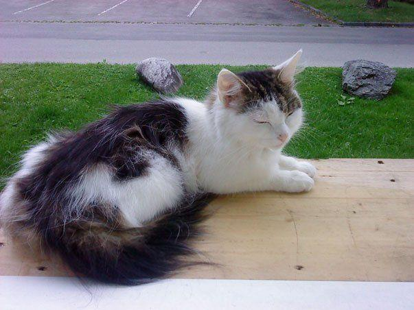 Wer hat Katze Molly im Raum Bregenz-Vorkloster gesehen?