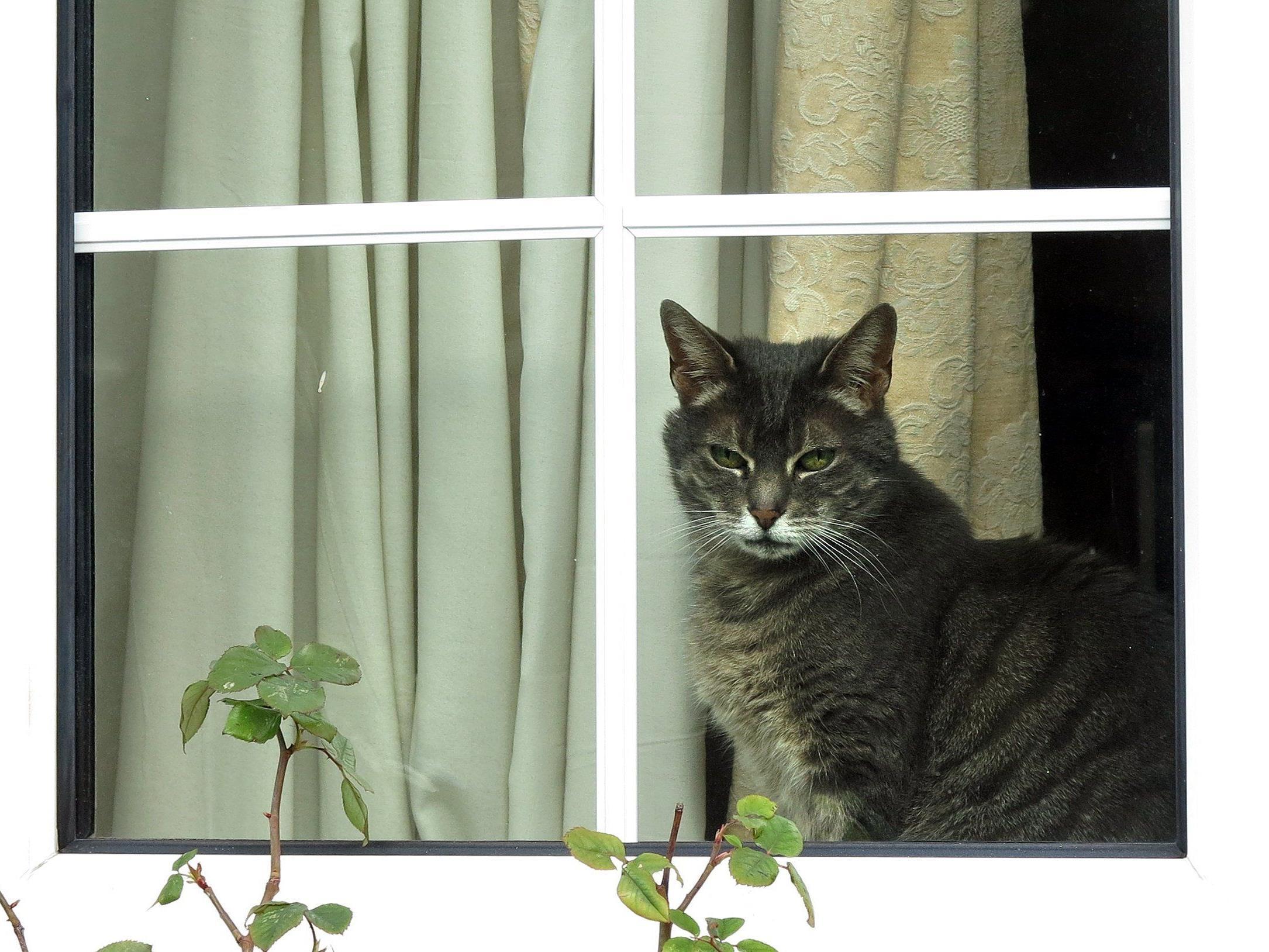 Gekippte Fenster können zur Todesfalle für Katzen werden.