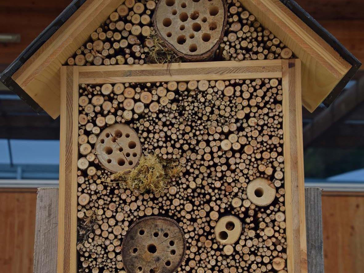 Wir bauen ein Insektenhotel: Samstag, 8. August, 9.00 Uhr, Marktplatz Rankweil