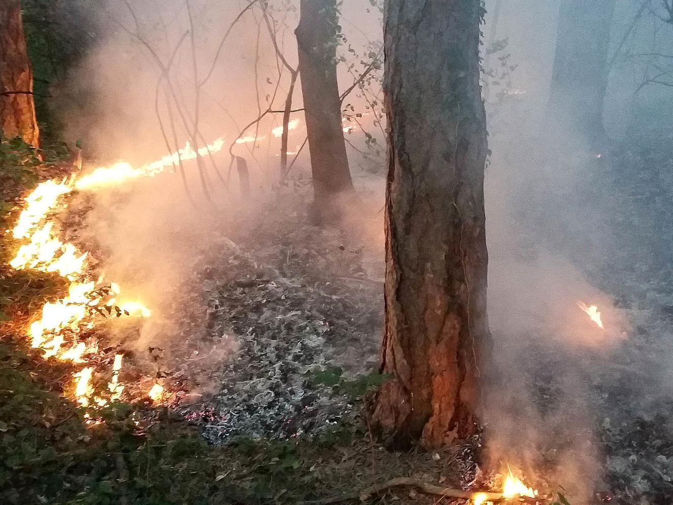 Die Gefahr für Waldbrände steigt.