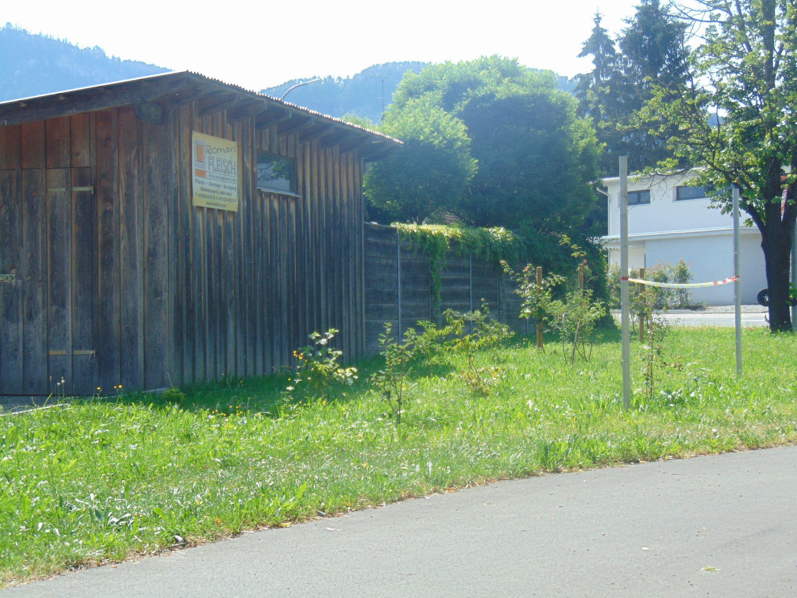Die neue Hecke in Altach