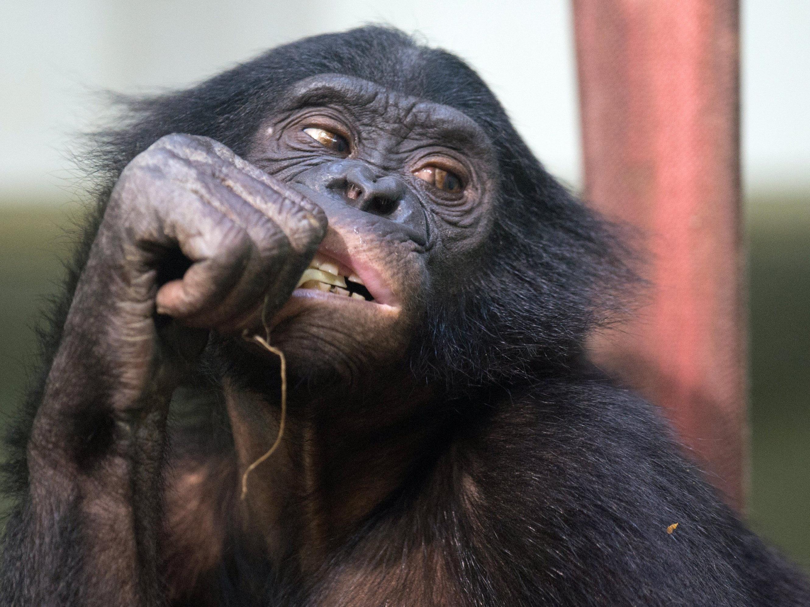 Affe ließ Geldregen über Tempelbesuchern in Indien niedergehen