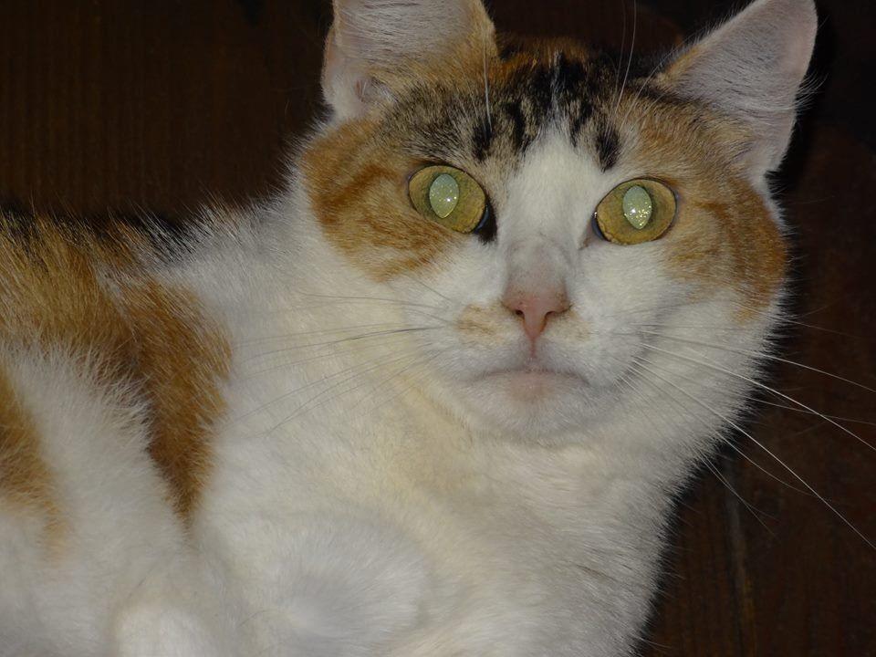Diese nette Katzendame sucht ein gutes Plätzchen.