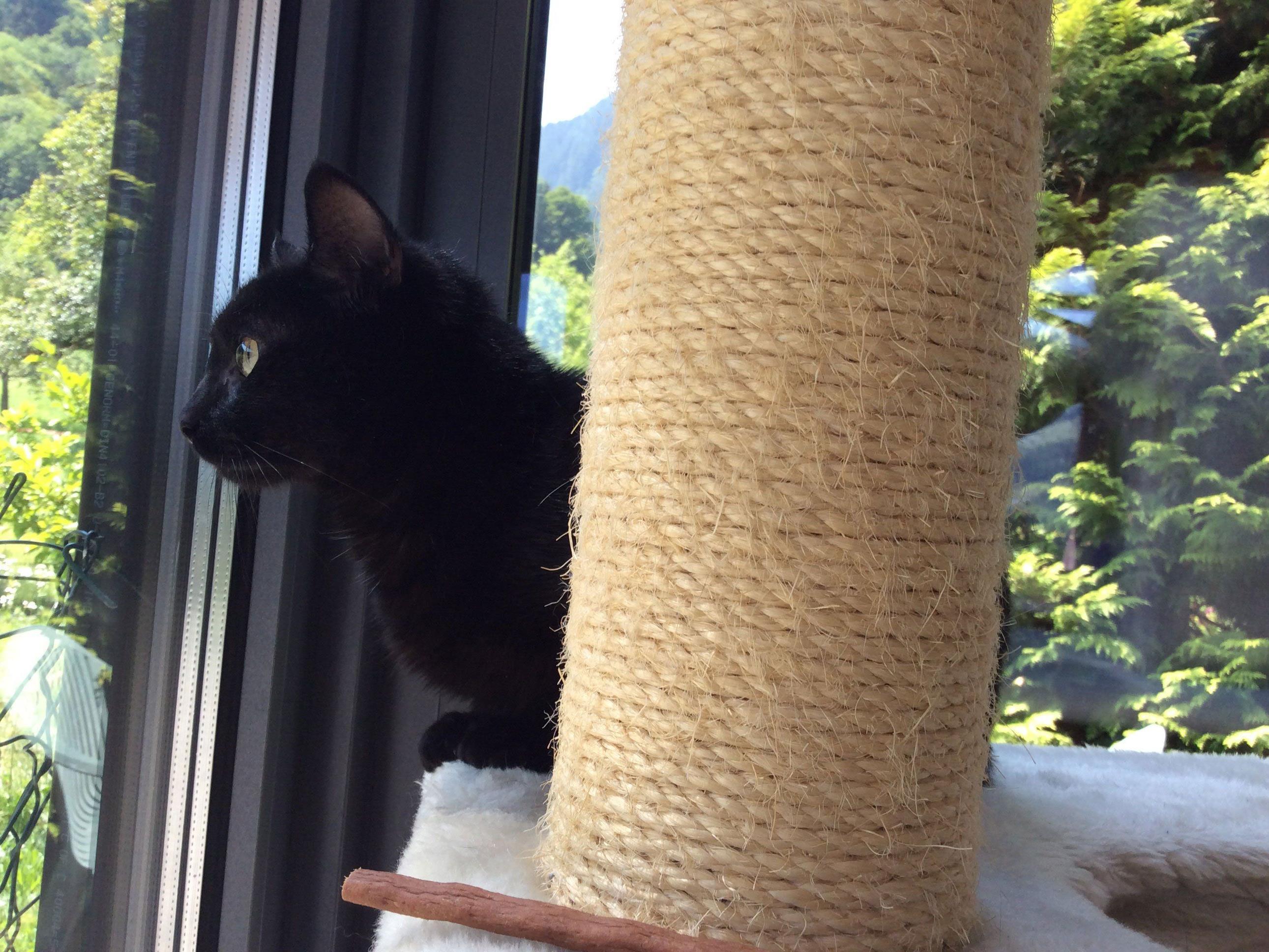 Junge Katzendame sucht ein Zuhause.