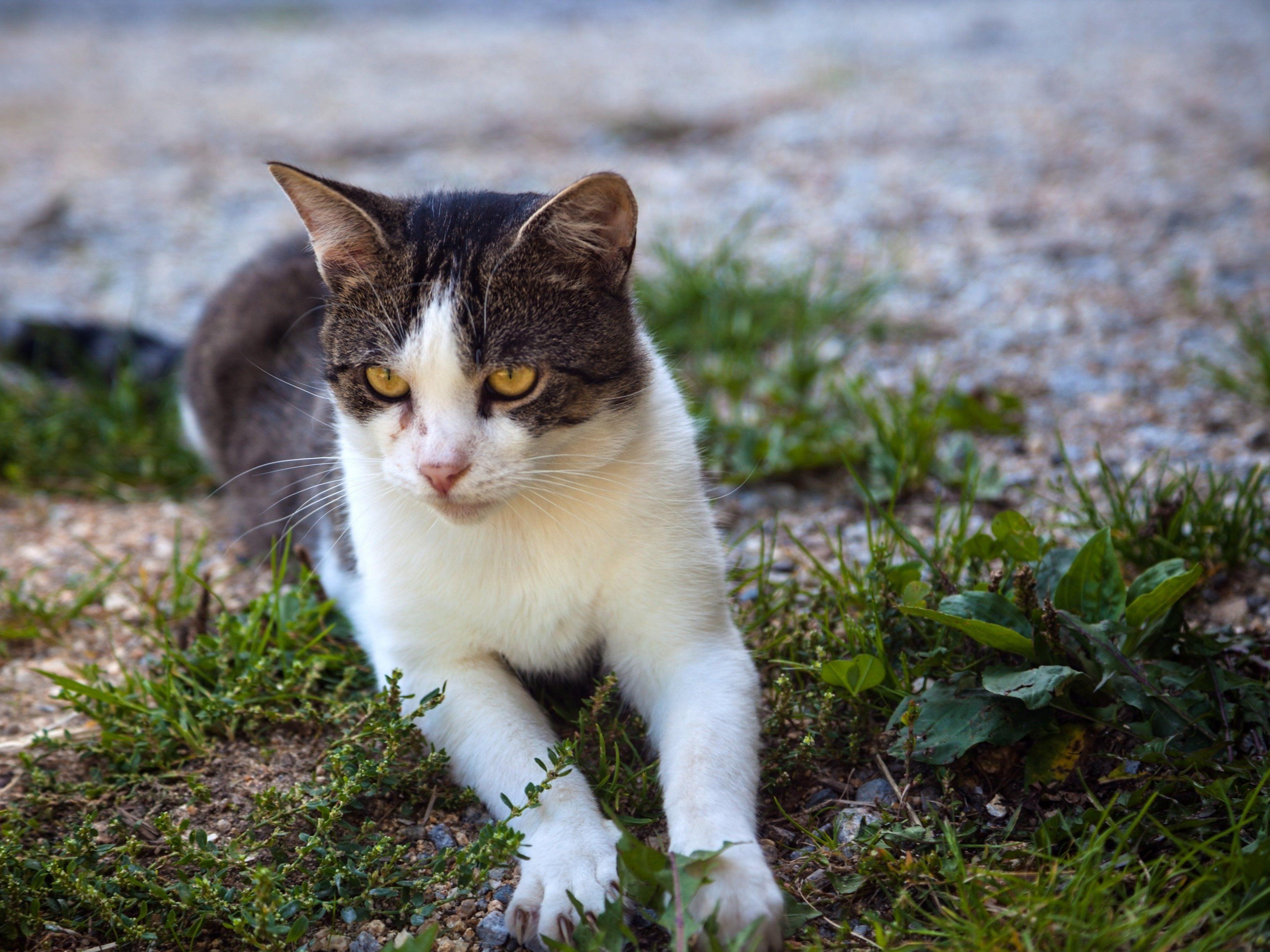 Die Katze wurde einfach übermalt (Symbolfoto).