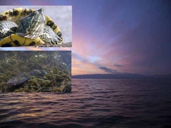 Wundervolle Bilder aus der Naturfilmreihe Universum am Bodensee.