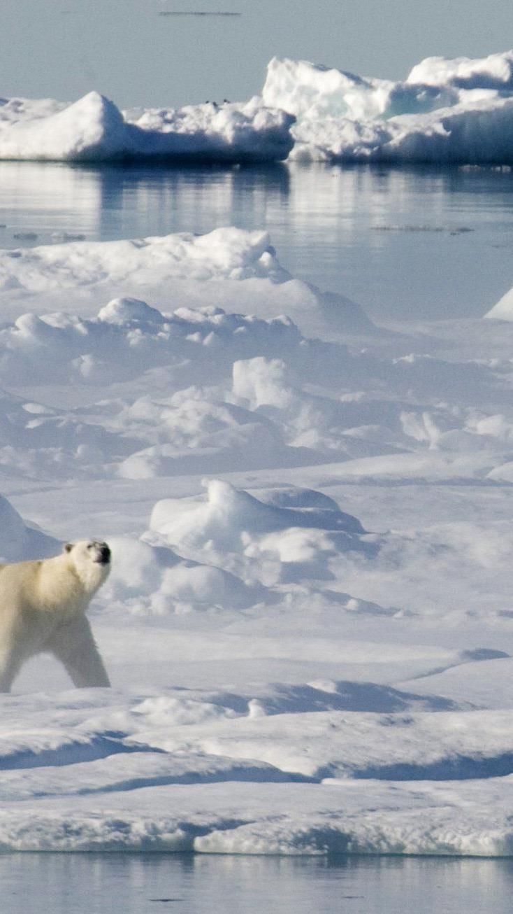Umweltschützer kritisierten Shell-Genehmigung für Ölbohrungen in Arktis scharf.