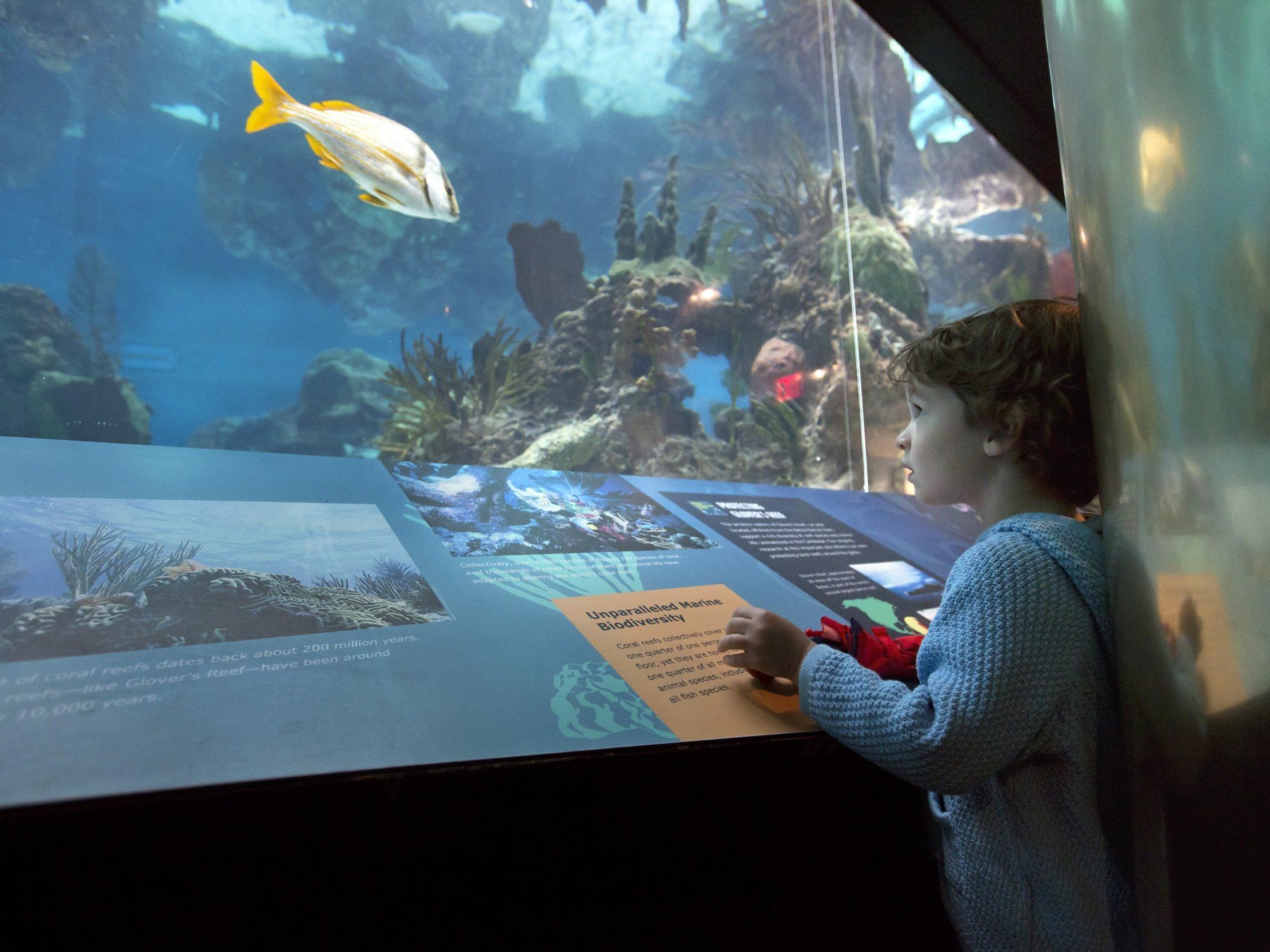 """Das """"Fisch-Karussell"""" soll das Gefühl vermitteln, wie ein Fisch durchs Meer zu schwimmen (Symbolbild)."""