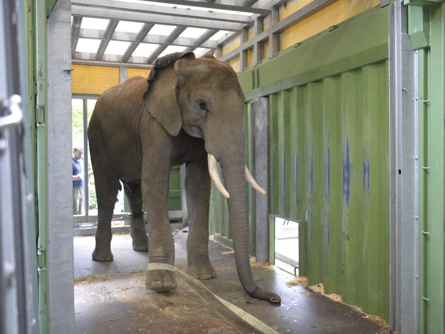Tier soll künftig im Zoopark Erfurt für Nachwuchs sorgen