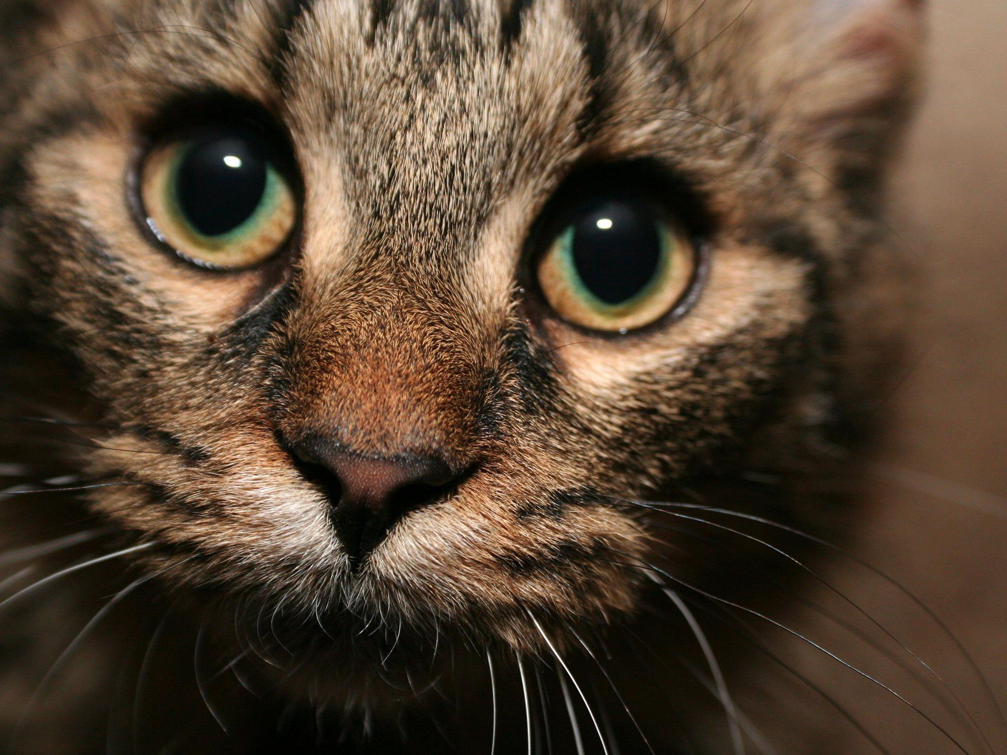 Katze überstand Fahrt von Verona bis nach München im Motorraum unbeschadet.