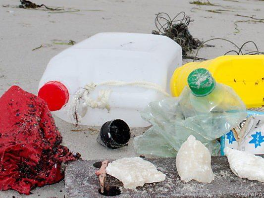 Viele Tiere sterben an den Folgen des Mülls