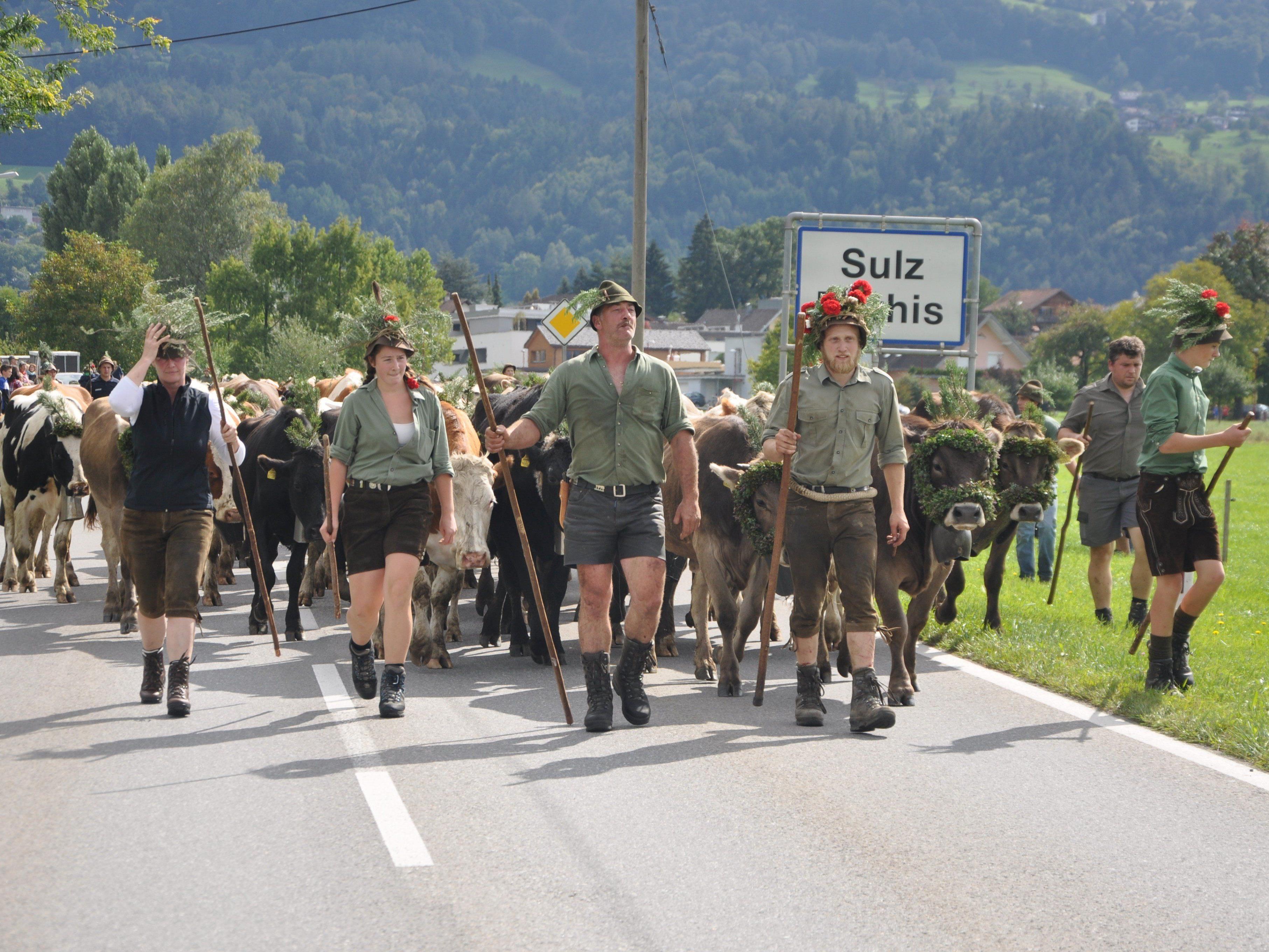 Mit rund 140 Stück Jungvieh trafen die Älpler beim Watzenegger Hof in Sulz ein.