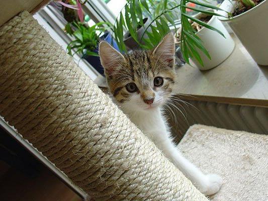Eine Katze auch drinnen glücklich zu machen, ist gar nicht so schwer