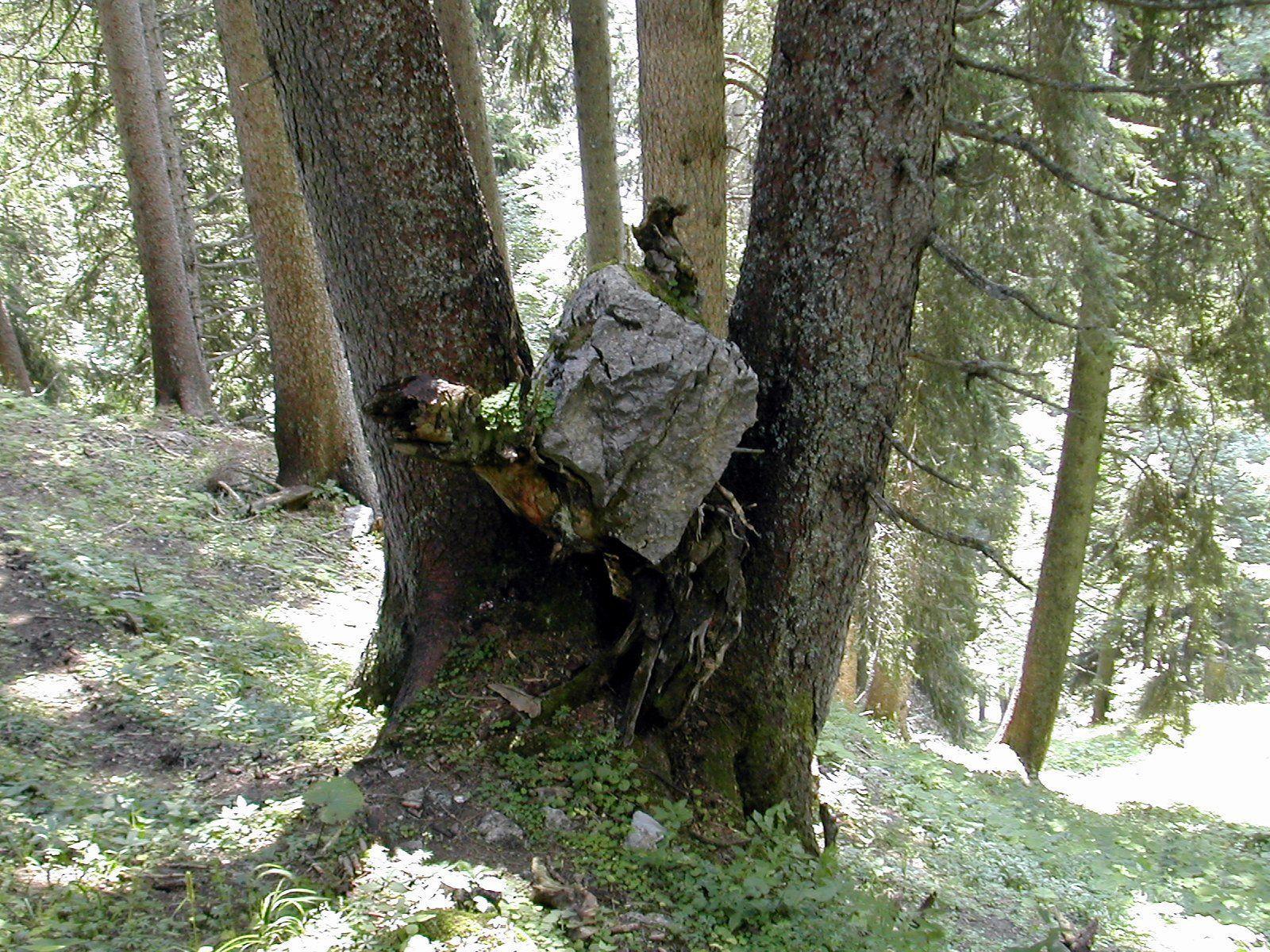 Landesrat Schwärzler: Beispielhafte Leistungen für den Wald gebührend würdigen
