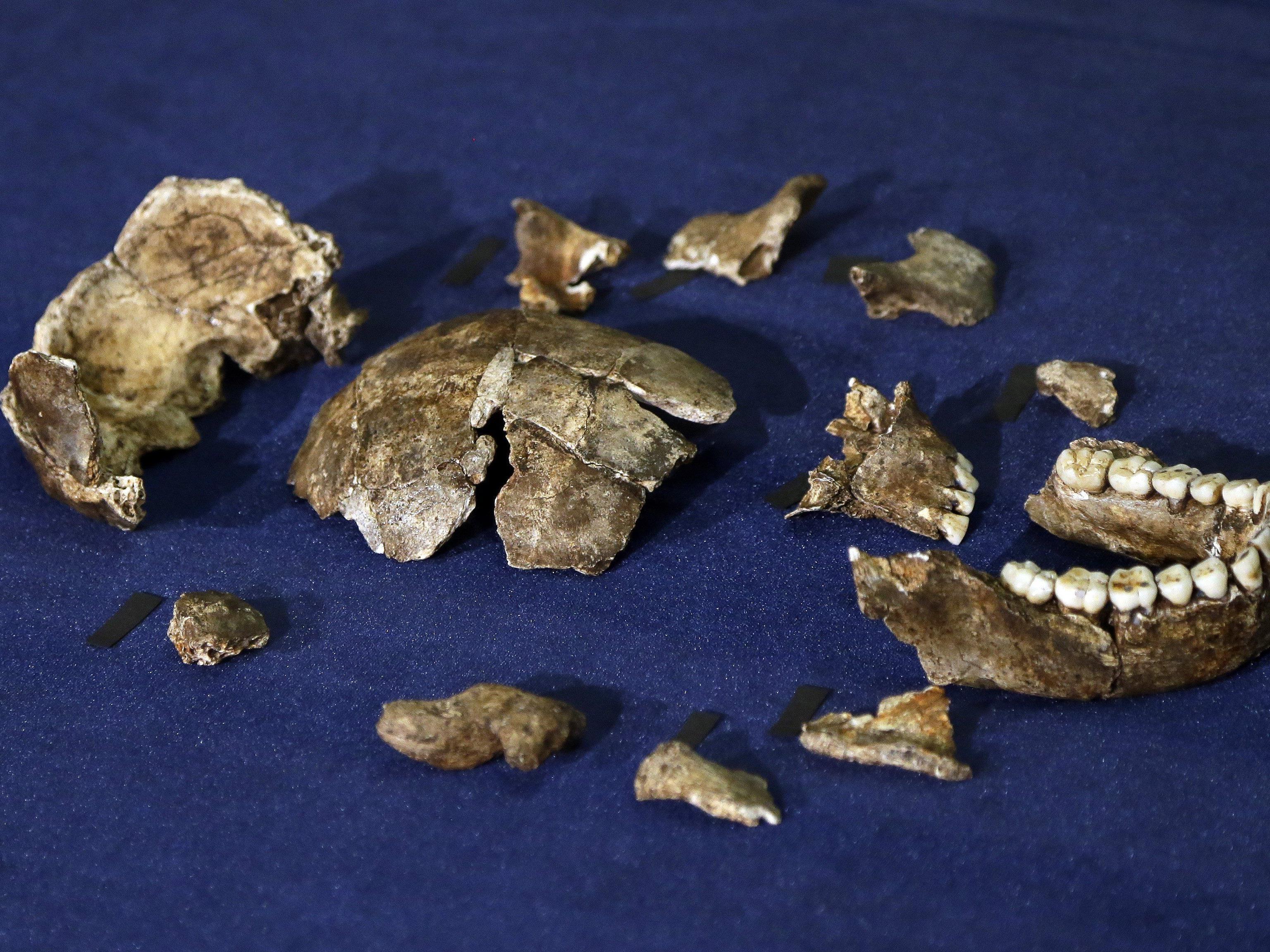Homo naledi: Zierlicher Verwandter des modernen Menschen entdeckt