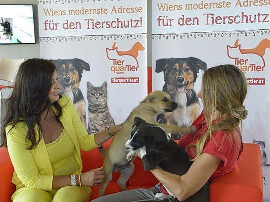 Ulli Sima im TierQuarTier Wien