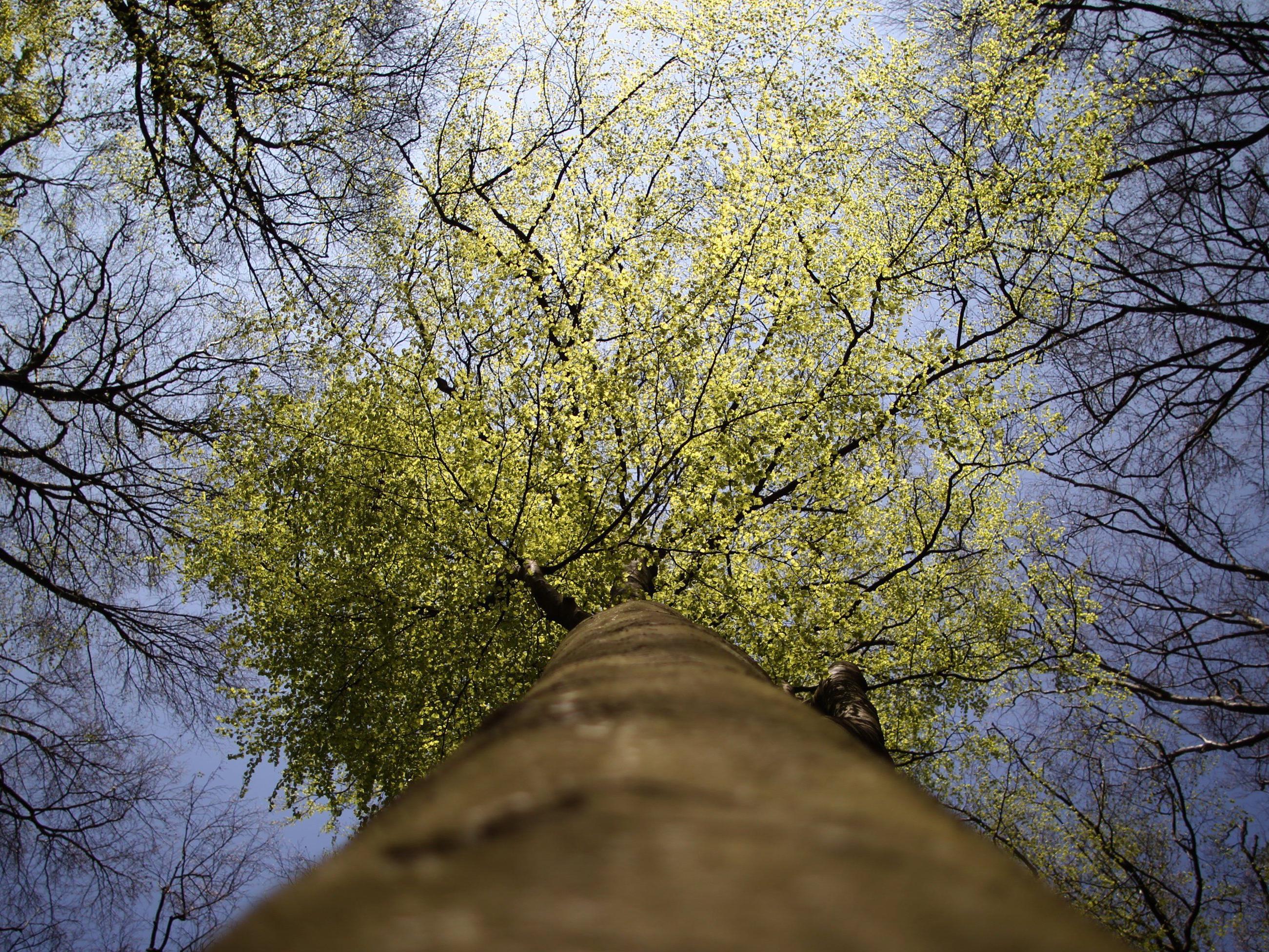 Gibt es mehr Menschen oder mehr Bäume auf der Welt? - Wissenschafter haben nachgerechnet.