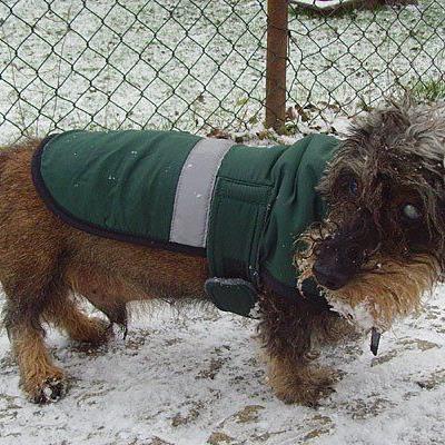 Wenn es stürmt und schneit, machen Hundemantel unter Umständen durchaus Sinn