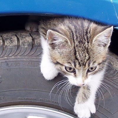Wenn Katzen auf die Reifen oder in den Motorraum kriechen, droht Lebensgefahr