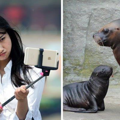 Mähnenrobben im Tiergarten Schönbrunn dürfen künftig nicht mehr mit einem Selfie-Stick fotografiert werden