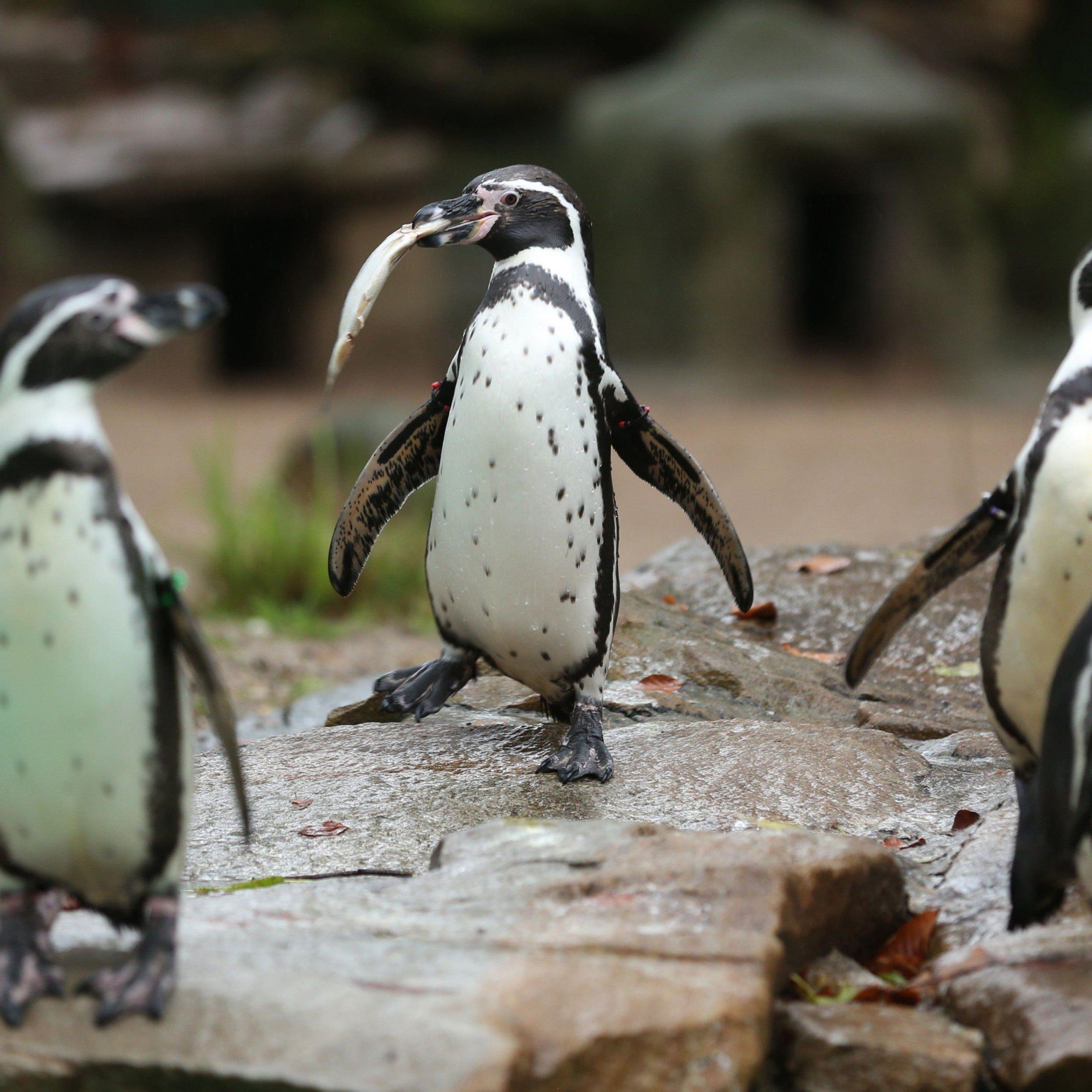 Mehrere rätselhafte Vorfälle im Dortmunder Zoo.