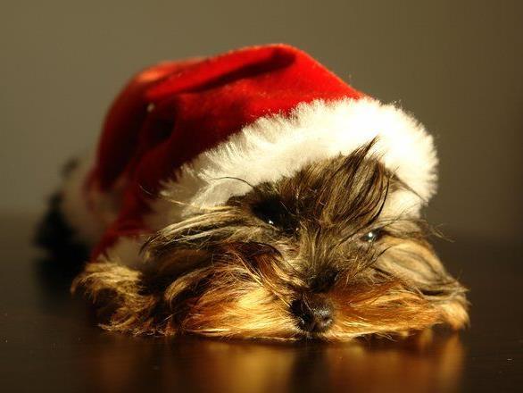 Tiere sind keine Weihnachtsgeschenke.