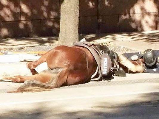 Der Polizist blieb bei seiner Stute, bis sie starb.