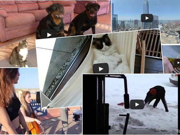 Kuriose Clips aus dem Netz: Die 15 beliebtesten Videos des Tages.