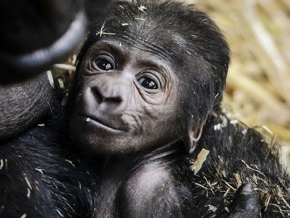 Zoo an europäischem Zuchtprogramm beteiligt.