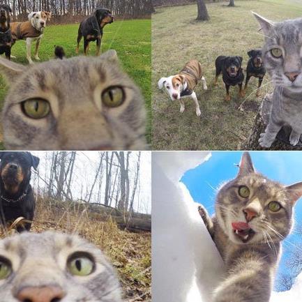 Neuer Internet-Hit: Manny, die Selfie-Katze.