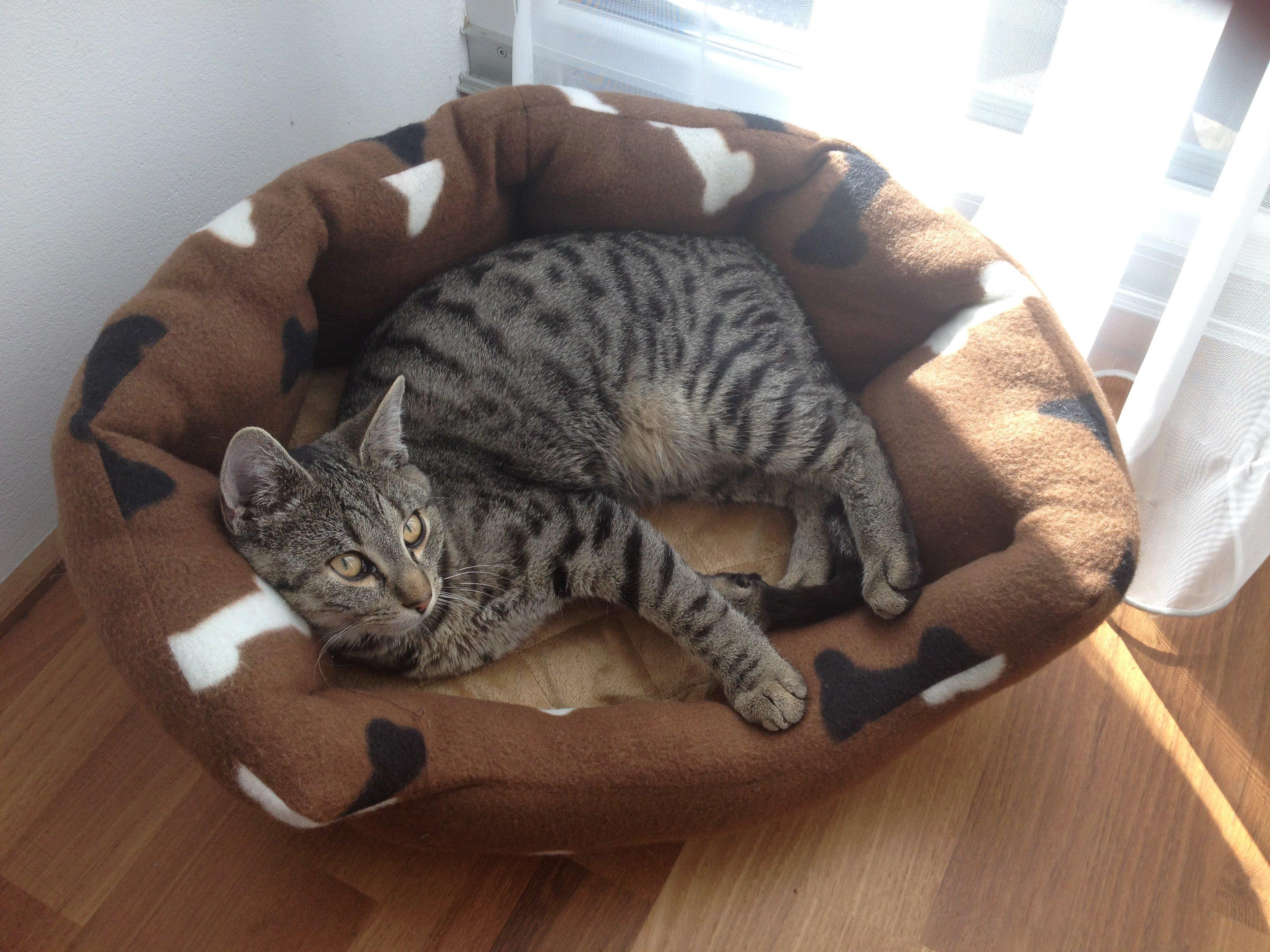 Unser Tigerkätzle Lucy