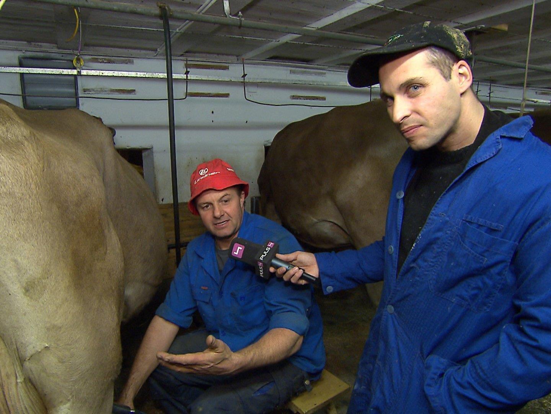 Auch Kühe wurden gemolken