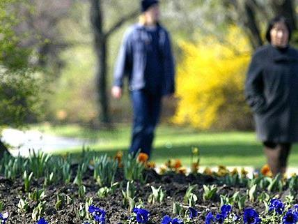 Der Frühling gibt ein Lebenszeichen