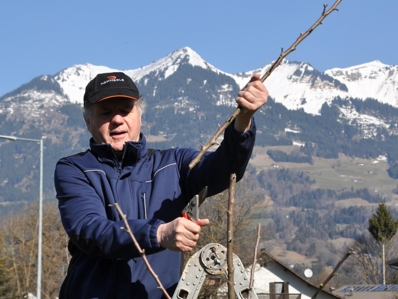 Ing Horst Flecker beim Baumschnitt
