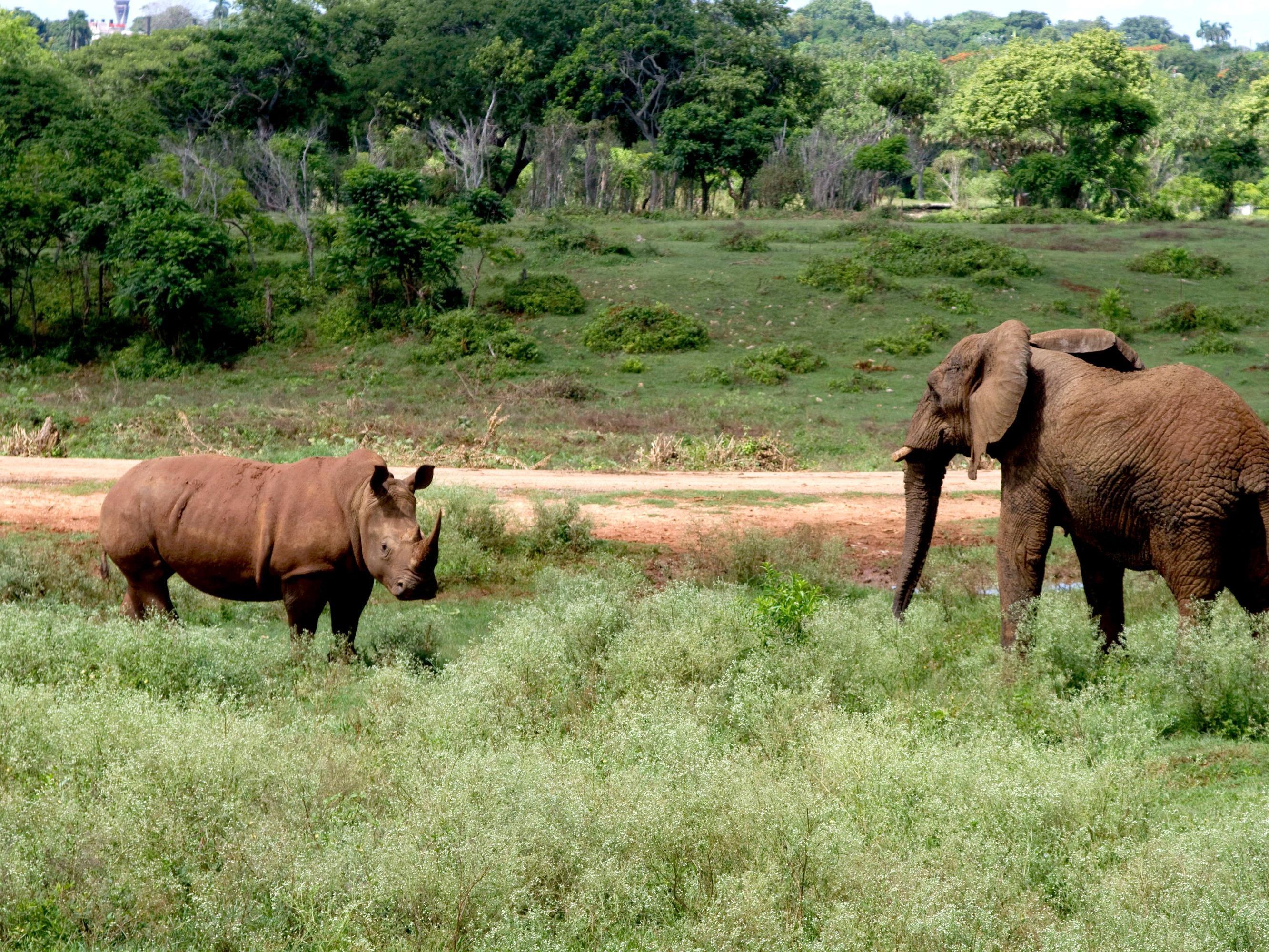 Für Horn und Elfenbein werden viele tausende Tiere getötet.