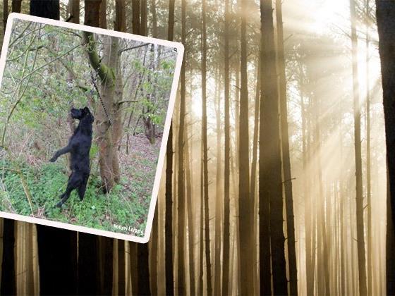 Grausiger Fund in einem Wald.