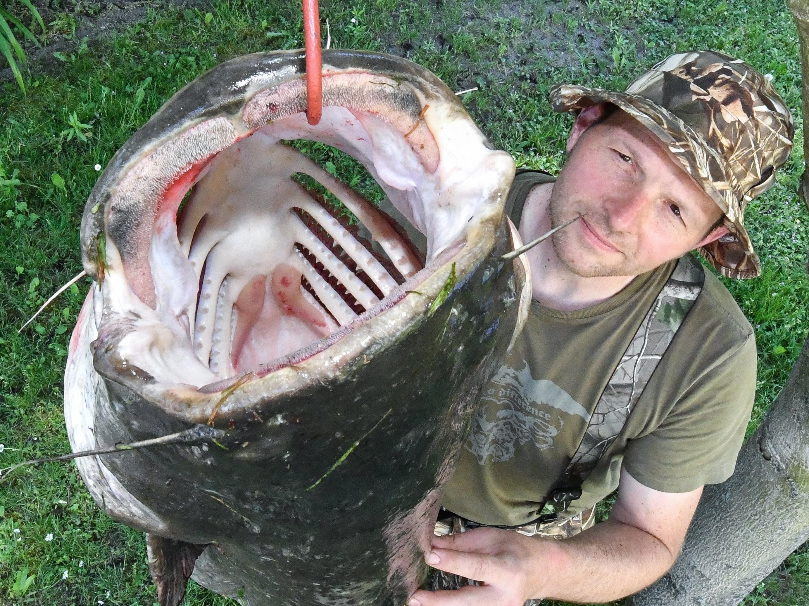 Der Fund im Bauch eines riesigen Wels schockte die Angler.