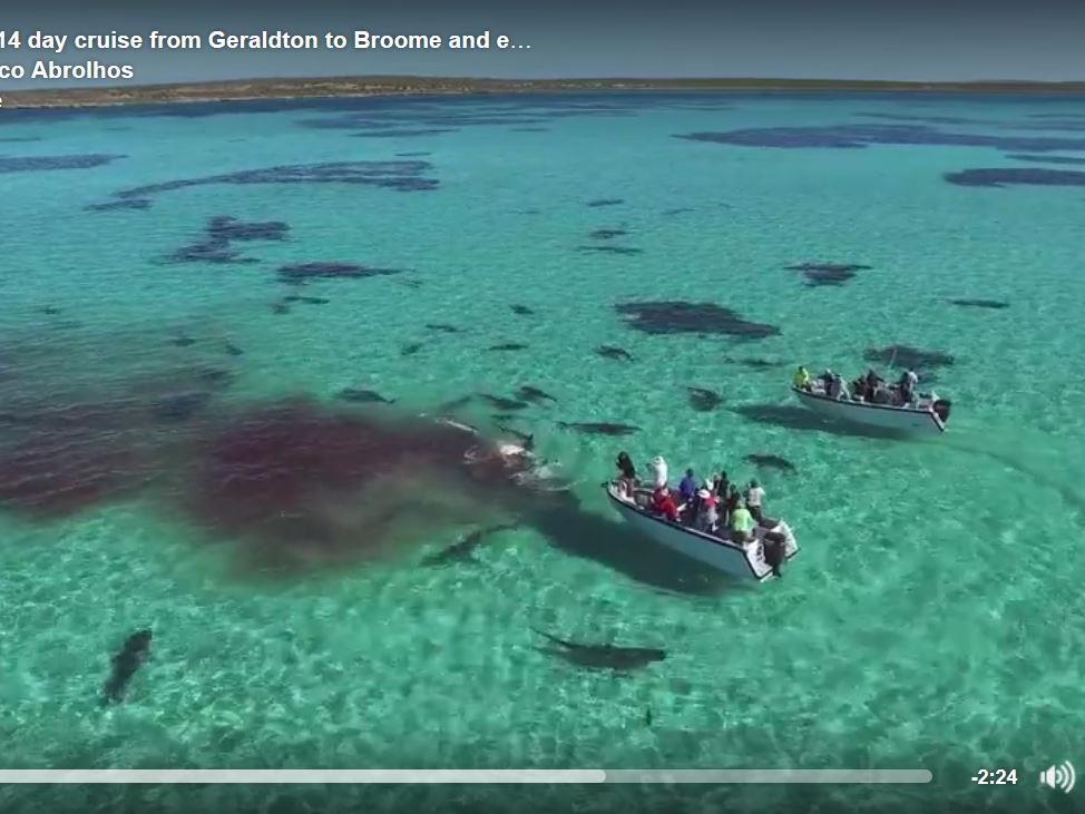 Das große Hai-Fressen ist ein Naturspektakel.
