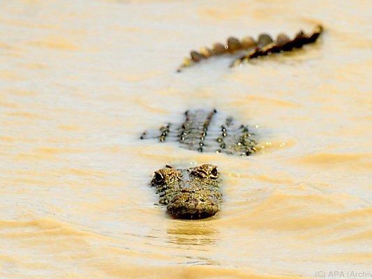In einem Krokodil wurden mögliche menschliche Überreste gefunden