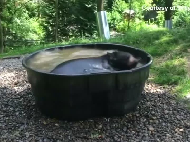 Takota nimmt ein Bad.
