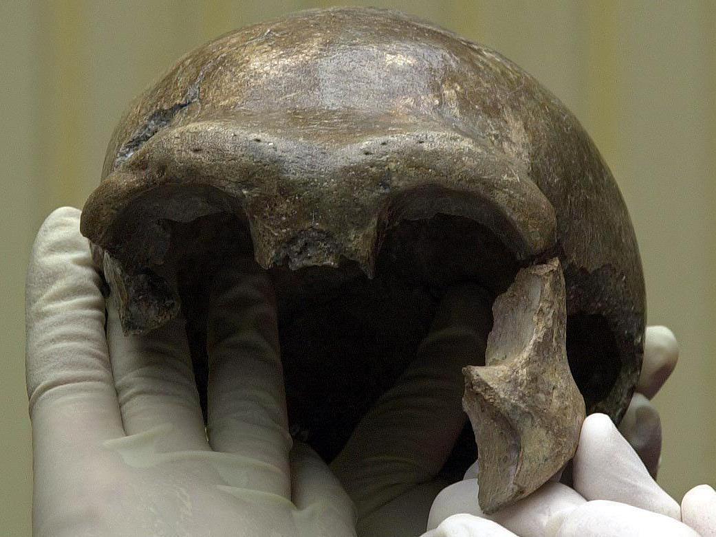 Unsere Vorfahren haben Knochen ihrer Mitmenschen sinnvoll genutzt