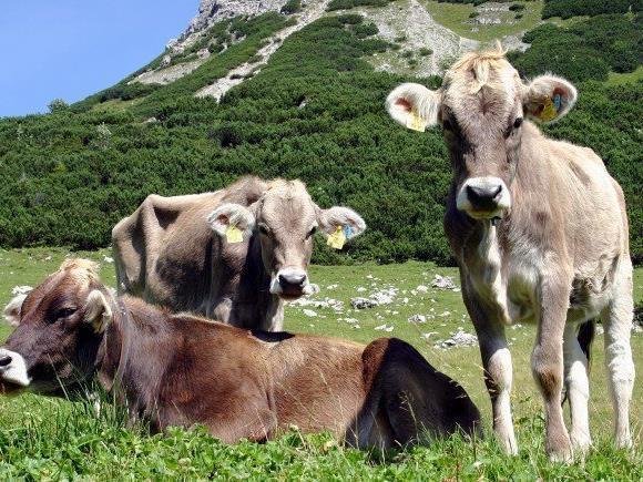 LR Schwärzler: Dank an alle Beteiligten für Einsatz im Interesse der Tiergesundheit.