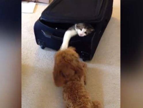Der Platz im Koffer ist heiß umkämpft.