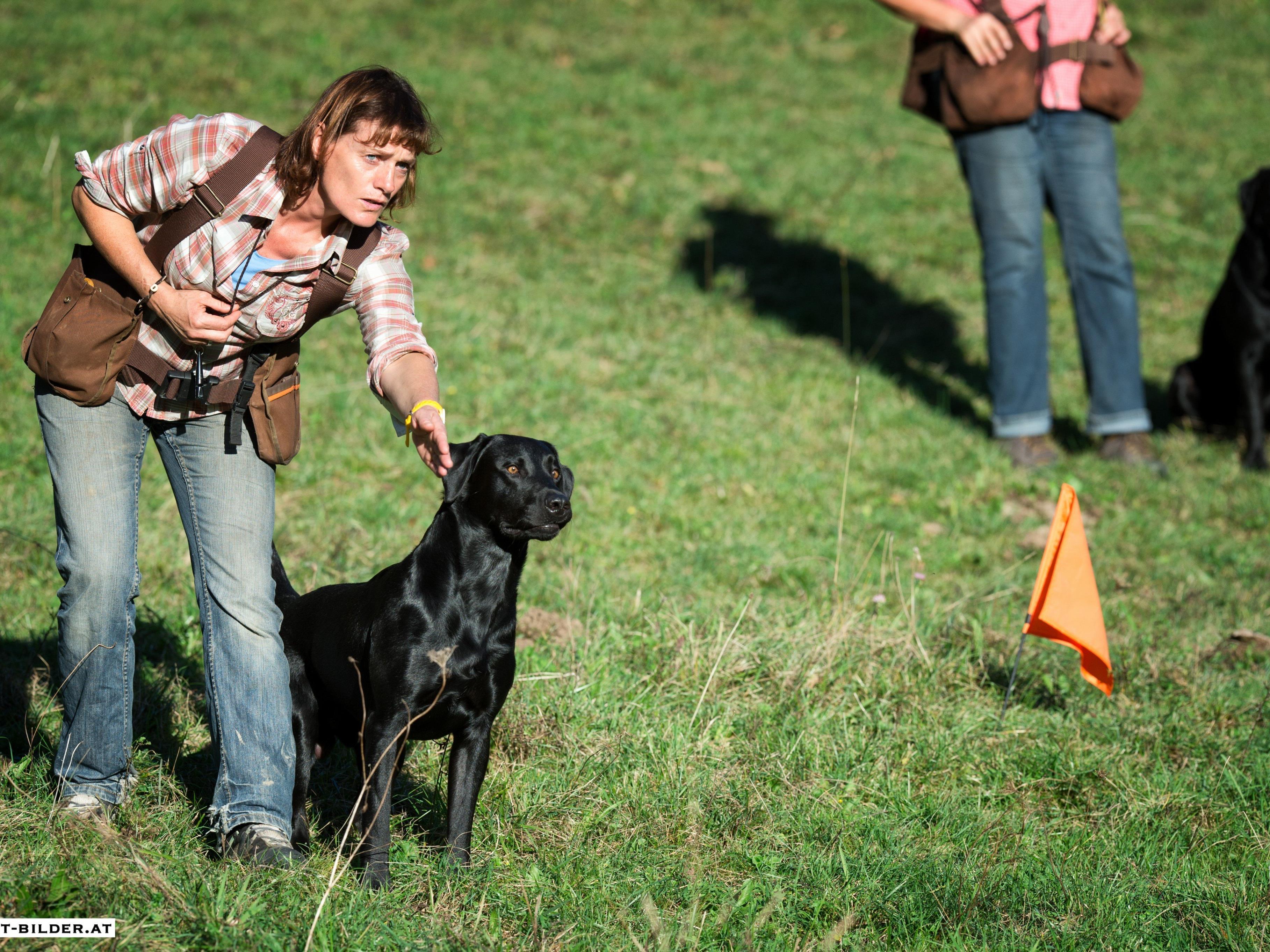 Interessierte Hundehalter erfahren, was zu einem entspannten Spaziergang mit Hund nötig ist.
