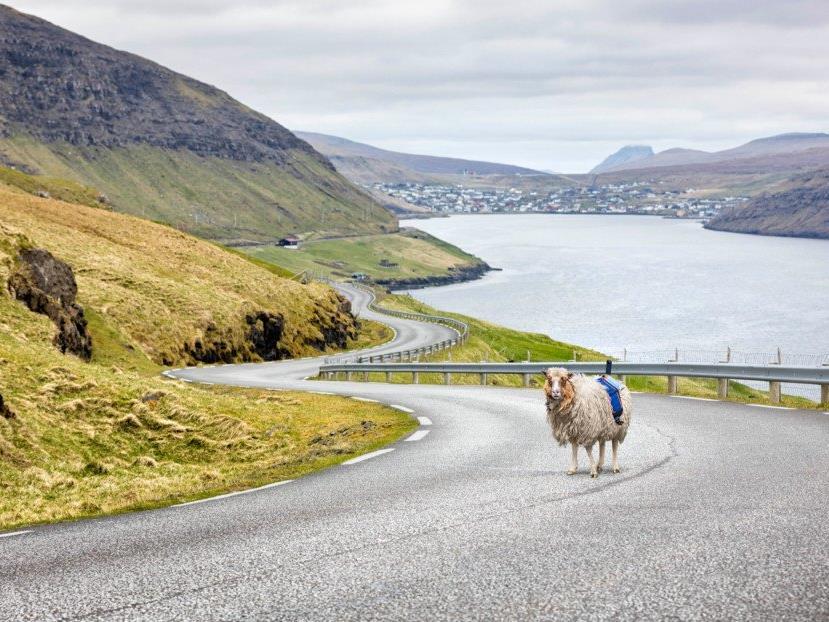Sheep View statt Street View in Schottland