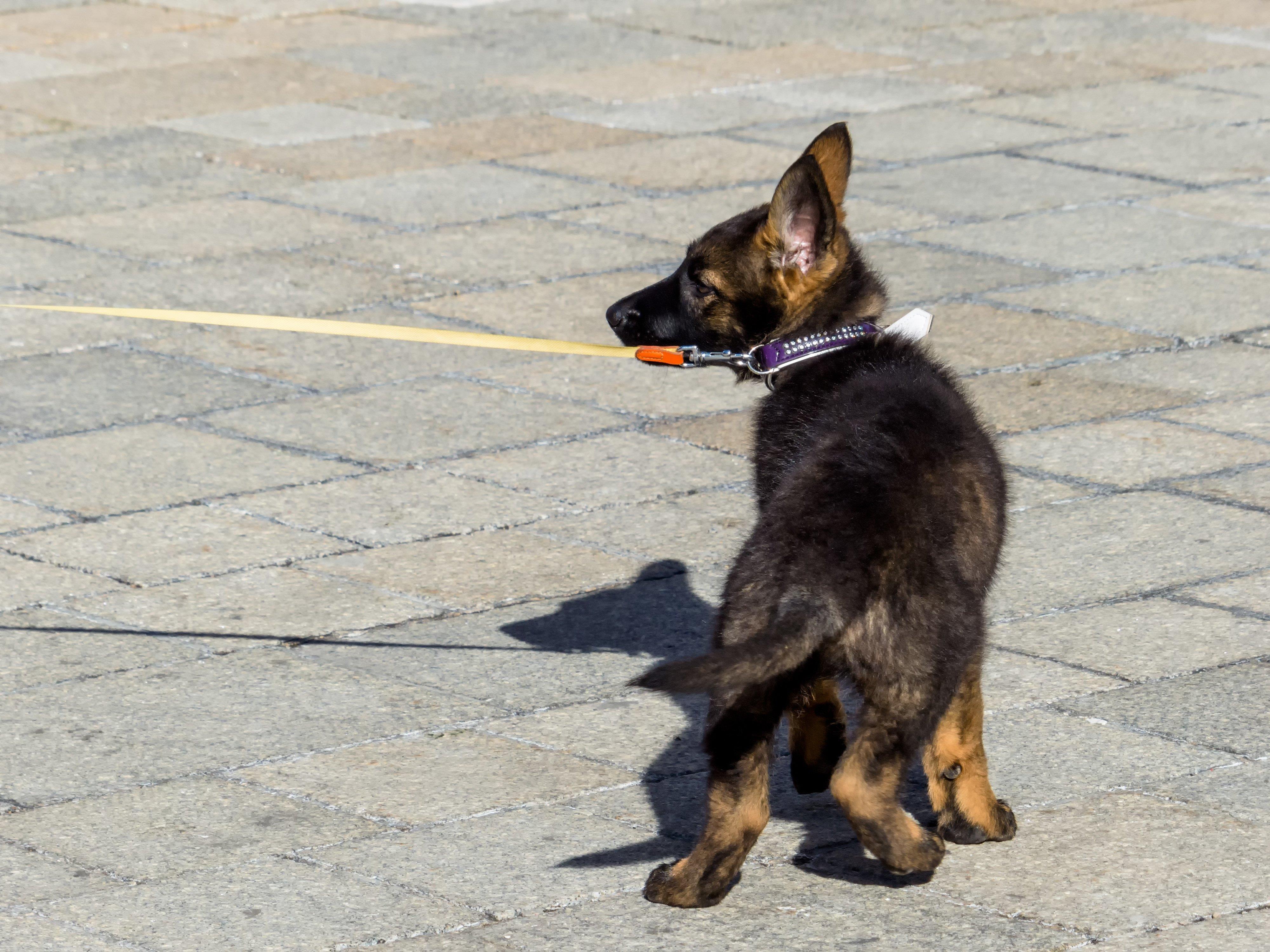 Für das angeklagte Vergehen der Tierquälerei sieht das Strafgesetzbuch für den Fall einer Verurteilung bis zu zwei Jahre Gefängnis vor.