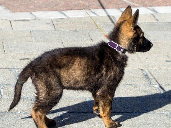 Die illegale Einfuhr von jungen Hunden – meist aus dem Osten Europas – ist ein großes Problem